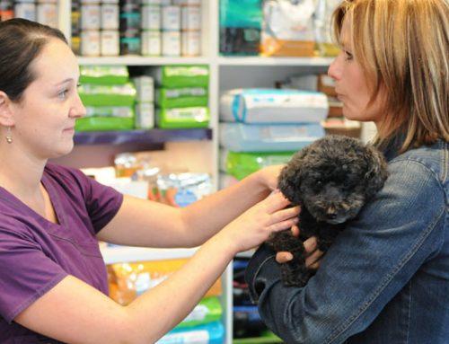 Conseils avant d'acheter un chien
