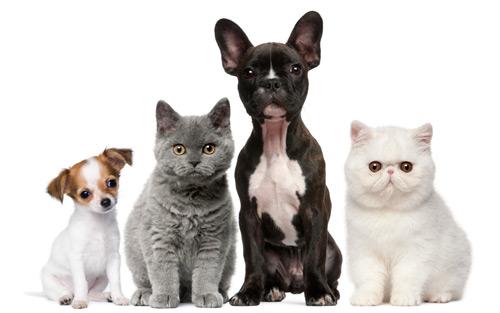 Clinique Vétérinaire Chien Chat