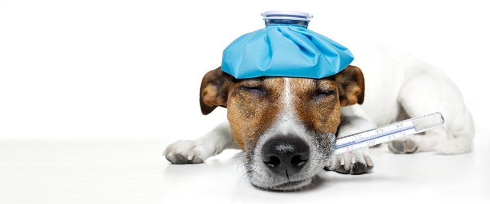 veterinaire-a-domicile-fr