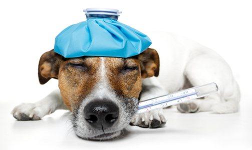 Vétérinaire à Domicile