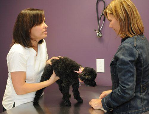 Clinique vétérinaire ouverte le dimanche